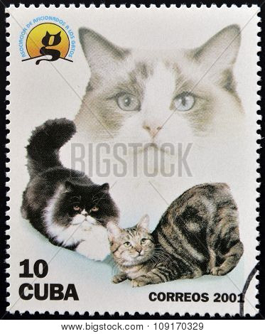 CUBA - CIRCA 2001: A stamp printed in the Cuba shows the cats circa 2001