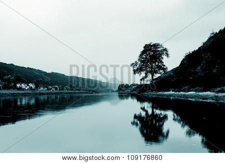 lonely tree near lake on background sky bw
