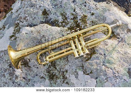 Trumpet Rock Texture
