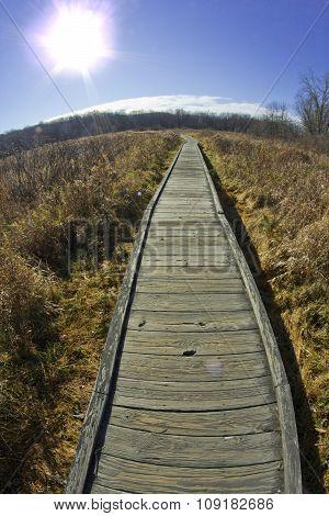 Wood Path Autumn Morning