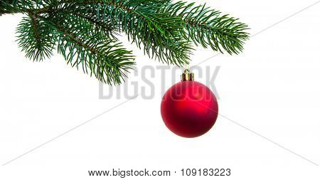 Christmas ball on twig of evergreen