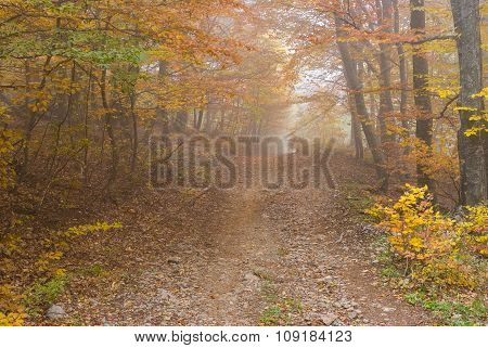 Earth road in Crimean forest