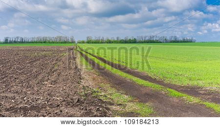 Landscape with agricultural fields and country road