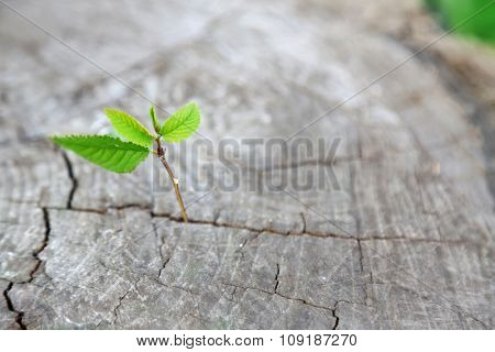 Beautiful seedling growing in the center trunk as a concept of new life