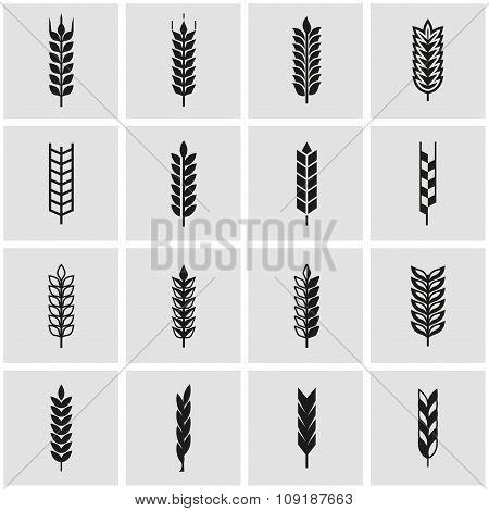 Vector Black Wheat Ear Icon Set