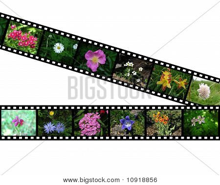 Pair of films with images of flowers
