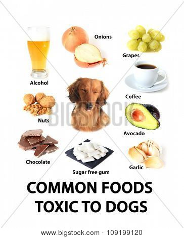 Chart of common foods toxic to dogs.