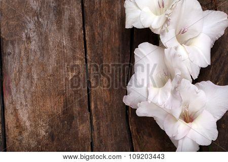Beautiful gladiolus on wooden background