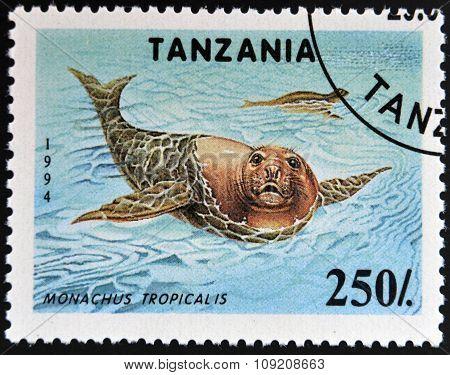 TANZANIA - CIRCA 1994: A stamp printed in Tanzania shows Carribean monk seals (Monachus tropicalis)