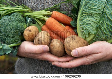 Man Holding Fresh Produce Gathered From The Garden