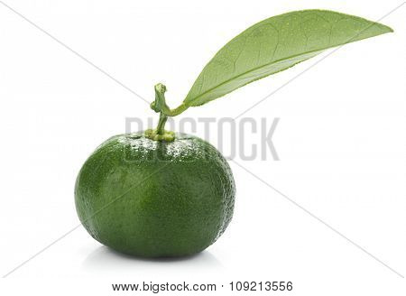 Hybrid kumquat tangerine isolated on white background.