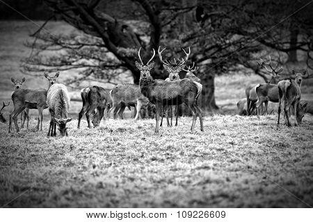 Deer stood together