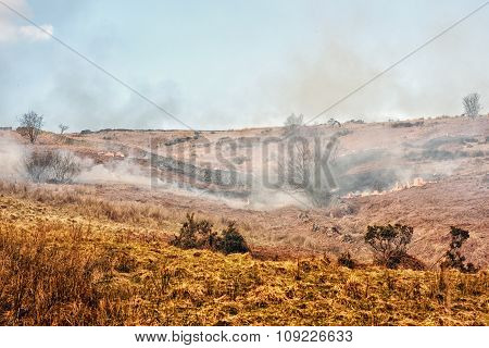 Fire in the heather