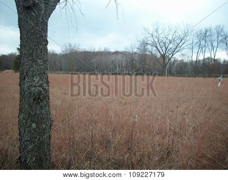 Open Field in Minnesota