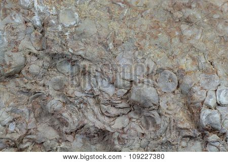 Cretaceous shell hash