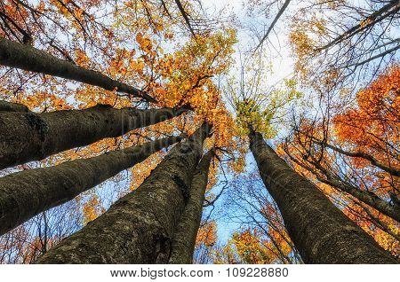 Colors Of The Forest In Autumn