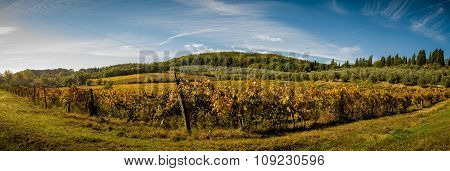 Panoramic Landscapes Of Vineyard And Olive Tree