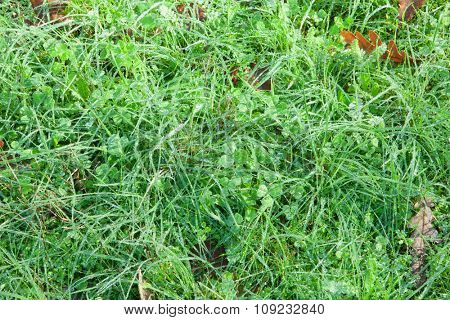 Dense foliage of wild grass for wallpaper