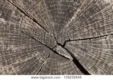 Close-up wooden cut texture with burning frame