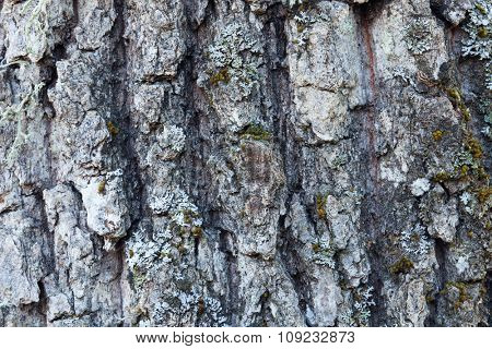 Tree trunk with moss close to wallpaper