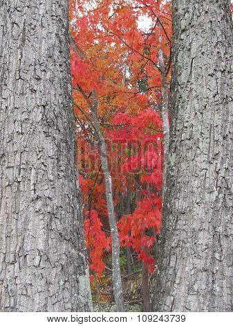 Trees Framing Fall Color