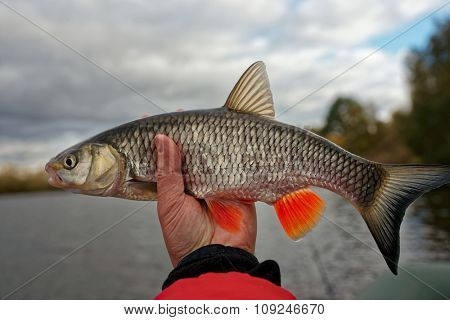Chub in hand against river landscape