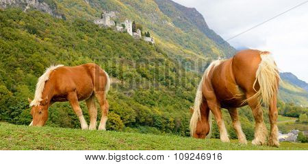 Two Beautiful Brown Horses At The Base Of The Mountain
