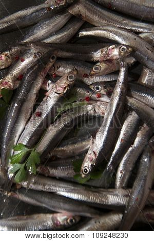 Fresh Anchovy