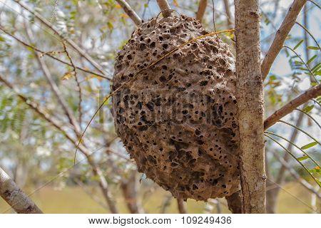 Ant's Nest