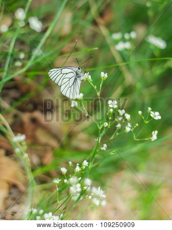 Floral Background. A Close Up Of The Butterfly On Grass