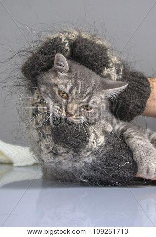 little kitten warming it in a warm gloves