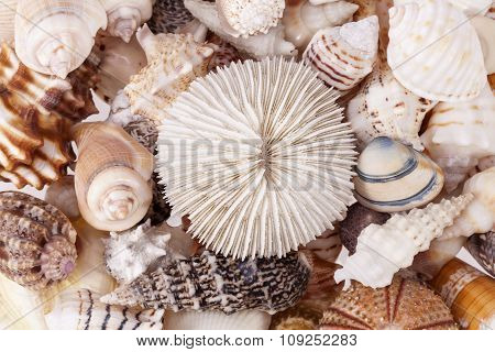 Background Of Various Kind Of Seashells, Close Up