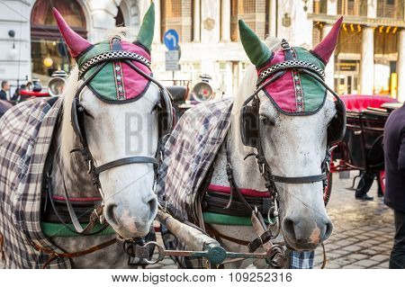 Two White Horses Harnessed To A Carriage