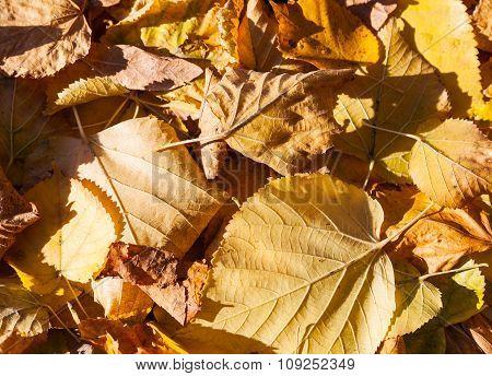 Macro Photo Of Dry Yellow Fallen Autumnal Leaves