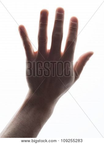 Humans hand showing five count