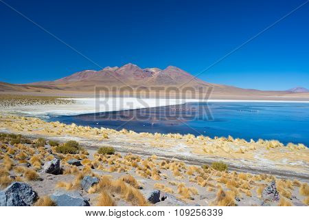 Blue Salt Lake With Flamingos On The Bolivian Andes