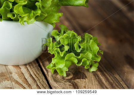Closeup Fresh Green Kale In Ceramic Bowl. Selective Focus.