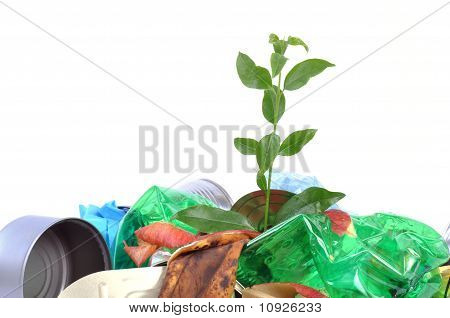 New Life From Rubbish Isolated On White Background