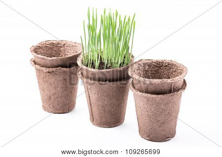 Peat Pots With Green Grass Isolated On White Background
