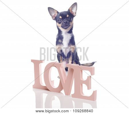 Chihuahua Dog With Letters