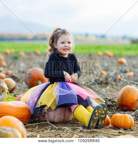 Little kid girl with lot of pumpkins on field