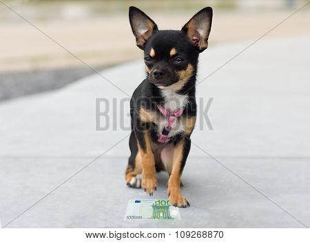 Dog Has Found Money