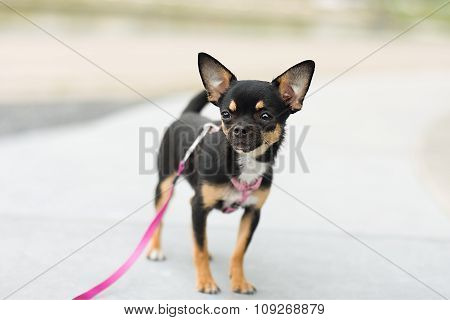 Dog Walking Outside And Look Very Cute