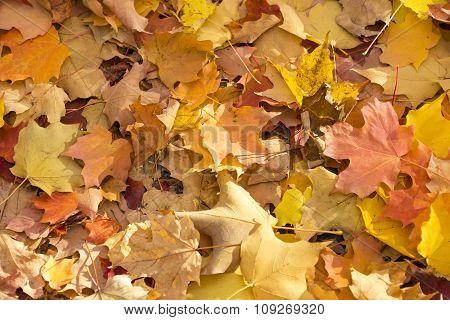 Autumn Fall Colorful Scenes in Toronto City Park