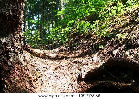 dirt path through forest