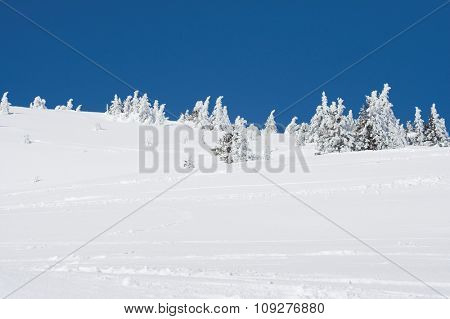 Snow mountain and trees on sunny winter day. Winter concept