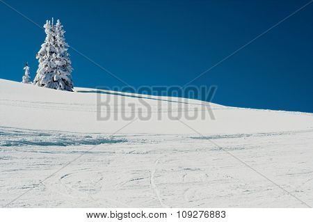 Snow mountain and tree under the snow. Winter concept