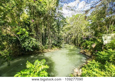 Wilderness Along The Martha Brae River, Falmouth, Jamaica