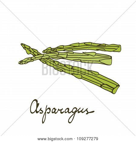 Colorful hand drawn card with asparagus