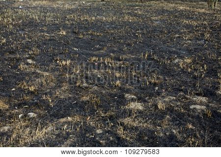 Black smut and grass. Burned field concept - polluted area